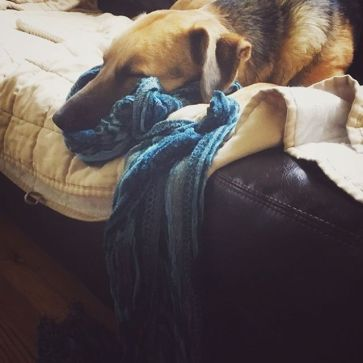 Ziva is on the couch sleeping with her head resting on a blue scarf