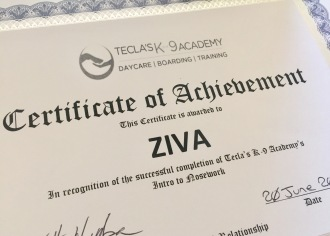 Ziva's certificate if Achievement for completing Nosework class