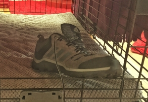 shoe in Ziva's crate