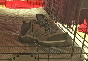 shoe in Ziva's crate