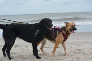Ziva and Murphy stand next to each other on the beach