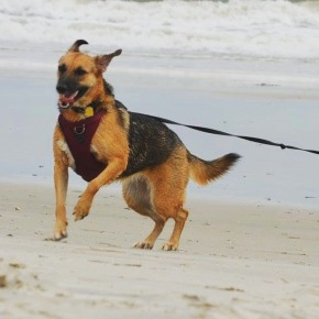 Ziva running on the beach