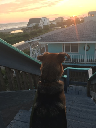 Ziva watches the sunset from the rooftop