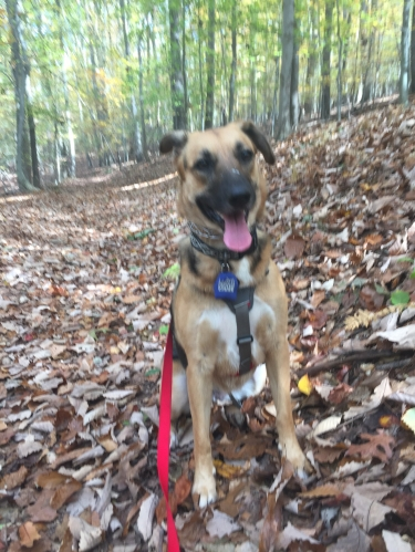 Ziva sits on a hike in the woods